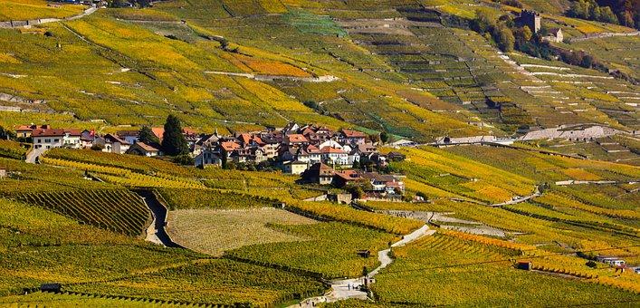 Vine, Fall, Viticulture, Wine, Vines, Color, Lavaux
