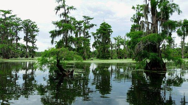 Bayou, Louisiana, Marsh, Nature, Water, Foam, Plants