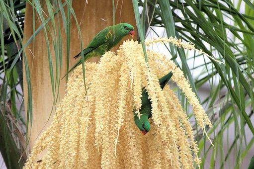 Lorikeets, Parakeets, Birds, Australia, Outback, Yellow