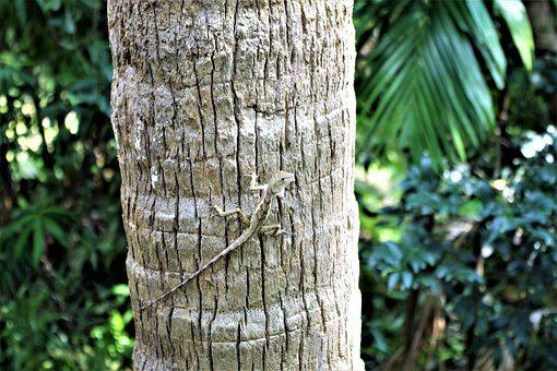 Gecko On The Tree, Reptile, Nature, Animal World