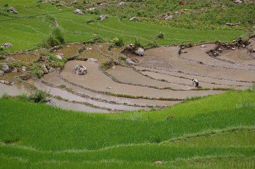 Bhutan, Rice Paddy, Asia