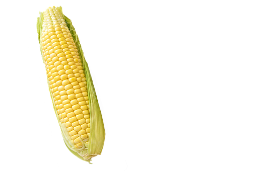 Corn, Maize, Isolated, White, Background, Food
