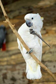 Parrot, Bird, Nature, Exotic, Ara, Plumage, Green