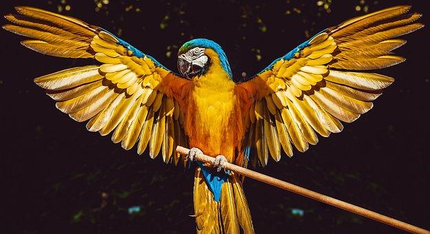 Parrot, Bird, Wings, Ara, Colored, Pen, Wing