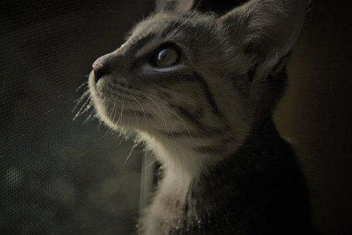 Cat, Kitten, Kitty, Pet, Cute, Feline, Adorable