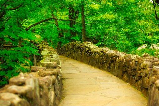 Rock City Gardens, Steinweg, Chattanooga, Forest, Trees