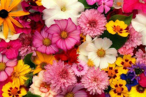 Flowers, Arrangement, Bouquet, Compilation, Decorative