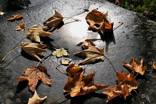 Autumn, Dry, In The Fall, Foliage, Mirror, Wind, Glow