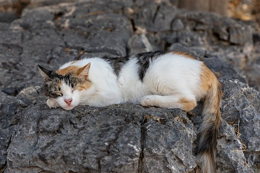 Sleeping, Cat, Cats, Feline, Cute, Stone, Sleep, Sweet