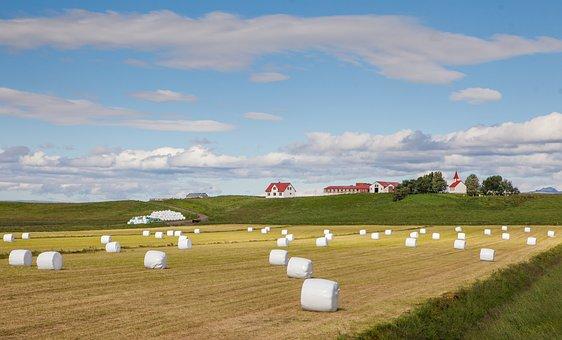 Iceland, Island, Hay, Cottage, Economy, Field