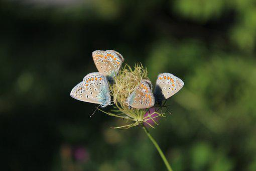 Butterflies, Flower, Insect, Nature, Animal, Blossom