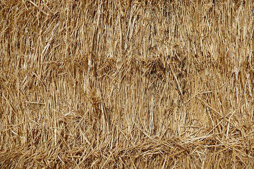 Straw, Hay, Harvest, Agriculture, Rural, Straw Bales