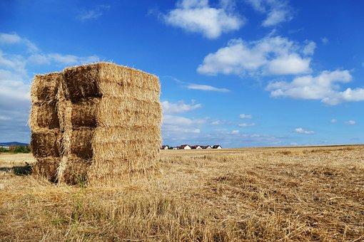 Straw, Hay, Harvest, Nature, Rural, Summer, Landscape