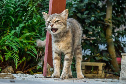 Meow, Cat, Stray, Young, Kitten, Animal, Outdoor, Tabby