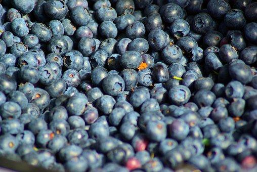Farm Market Blueberries, Farm, Market, Blueberry