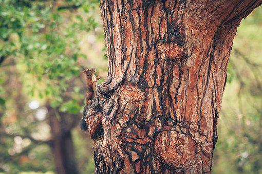 Squirrel, Forest, Nature, Animal, Animal World, Cute