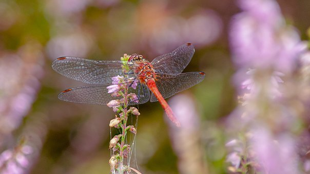 Dragonfly, Insect, Nice, Color, Beautiful, Summer