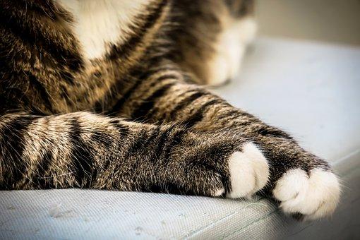 Cat, Paws, Cat's Paw, Cat Paw, Paw, Break, Concerns