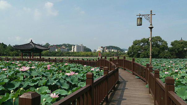Jeonju, Deokjin Park, Republic Of Korea, Travel