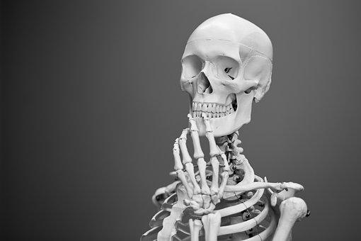 Skeleton, Anatomy, Bones, Human, Medical, Medicine