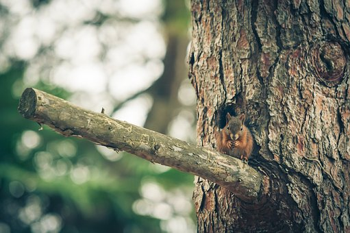 Squirrel, Nature, Forest, Animal, Cute, Rodent