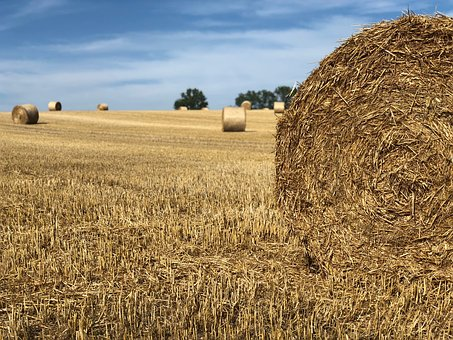 Nature, Straw Bales, Harvest, Agriculture, Summer