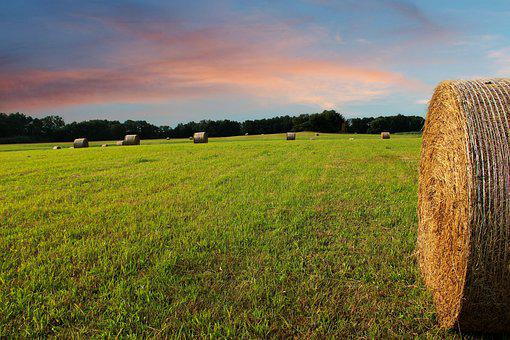 Straw Bales, Arable, Field, Agriculture, Straw, Harvest