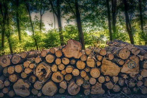Wood, Tree, Cut, Nature, Trunk, Texture