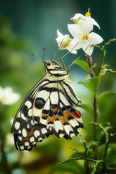 Butterfly, Insect, Nature, Wing, Animal, Close Up