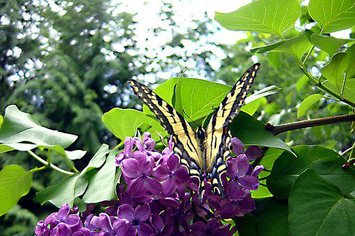 Butterfly, Nature, Insect, Wing, Colorful, Summer