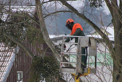 Tree Pruning, Cut, Saw, Wood, Tool, Sharp, Tree