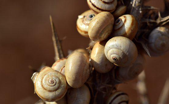 Snail Shells, Group, Collection, Animals, Molluscs