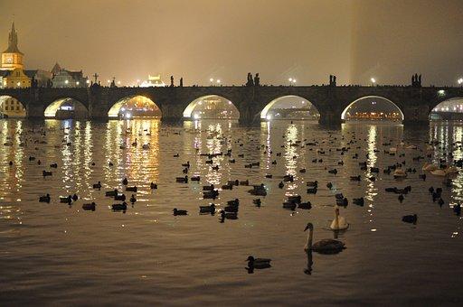Prague, Bridge, City, River, Night, Ducks, Swans