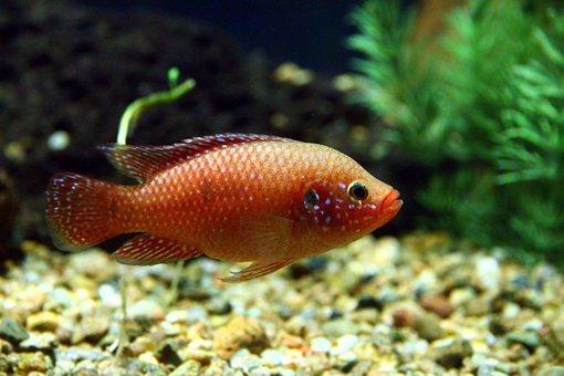 Fish, Aquarium, Bright, Colorful, Red, Underwater