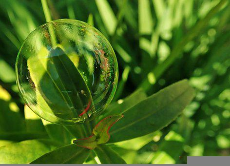 Bubble, Leaves, Plants, Garden, Nature