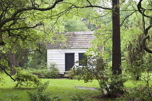 Cabin, Charleston, Trees