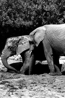 Elephant, Africa, African Elephant, Kenya, Trunk, Dust