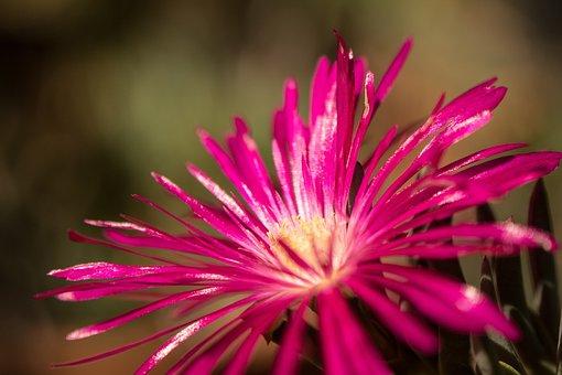 Flowers Leaves, Ornamental Trees, The Garden