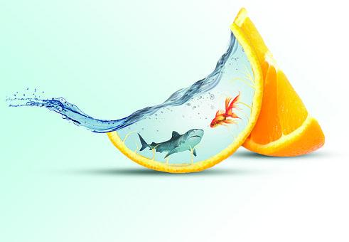 Fish, Shark, Fruit, Orange Slices, Water