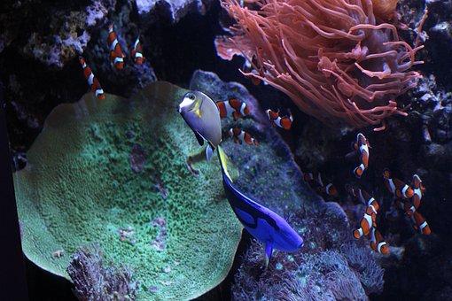 Monterey Aquarium, Monterey, California, Water