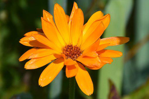Orange, Rose, Garden, Bloom, Nature, Plant, Blossom
