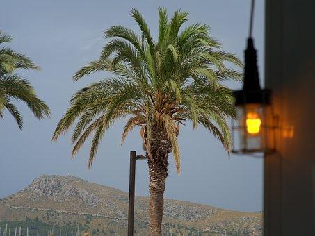 Palm, Light, Lamp, Sky, Mountains, Lantern, Nature