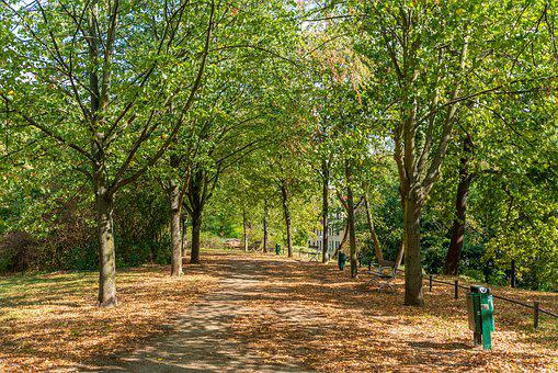 Park, Magdeburg, Nature, Out, Saxony-anhalt, Trees