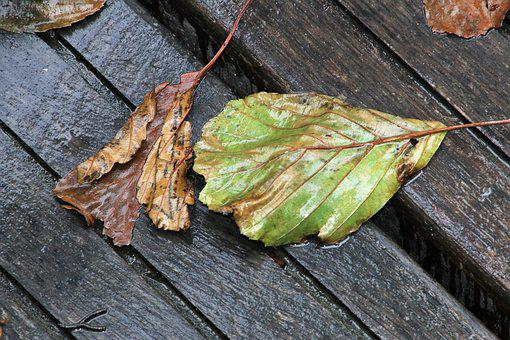 Rain, Foliage, Autumn, Wet, Brown, Plant, Collapse