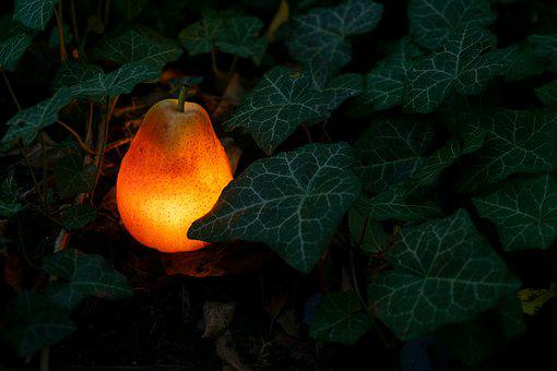 Pear, Light Bulb, Garden, Ivy, Hedera Helix, Pyrus
