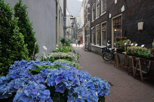 Road, Amsterdam, Flowers, Tourism, Travel, Bike