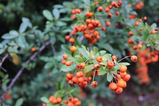Rowan, Cat, Plant, Nature