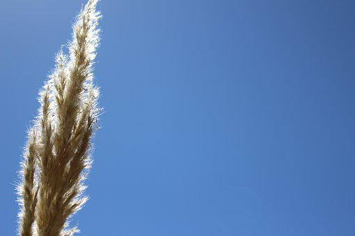 Stem, Harvest, Field, Light, Summer, Sky, Reflection