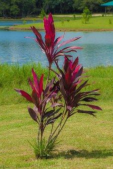 Ornamental, Plant, Foliage, Lakeside, Sunny, Clear