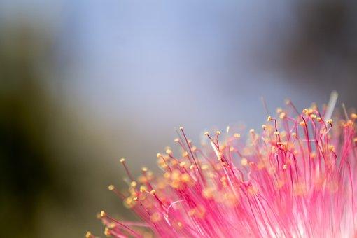 The Garden, Ornamental Trees, Flowers Leaves